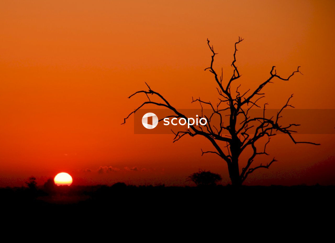 Silhouette of leafless tree during sunset