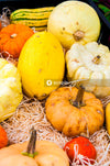 Yellow and orange pumpkins on brown dried leaves