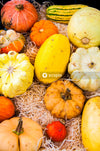 Yellow and orange pumpkins on white and blue textile