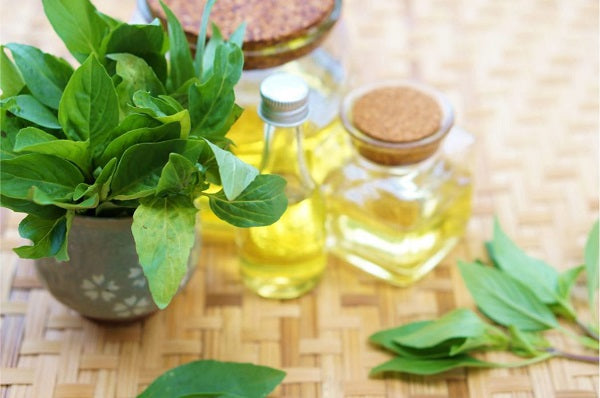 Basil Essential Oil for Low Blood Pressure Level