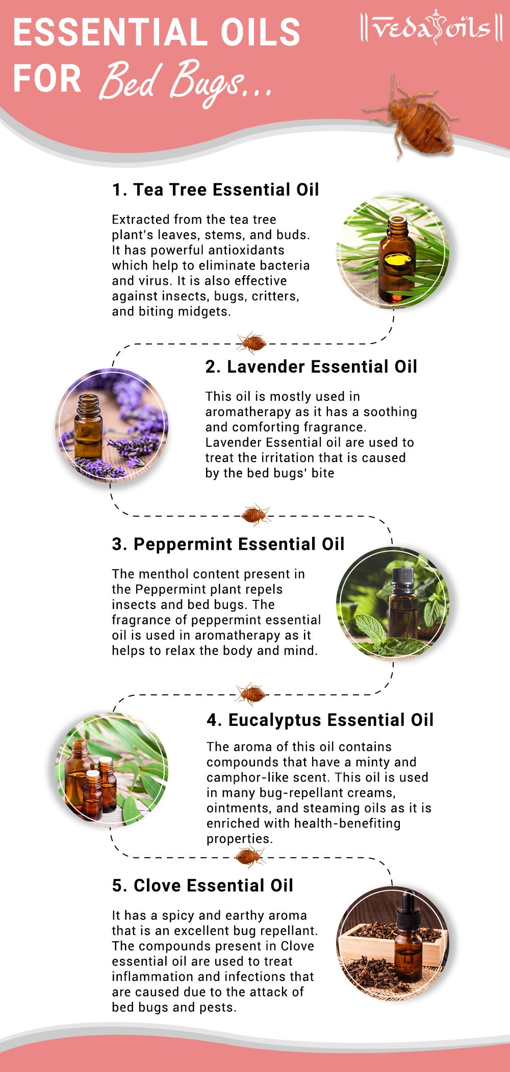 Essential Oils for Bed Bugs Prevention - How to Kill Bed Bugs
