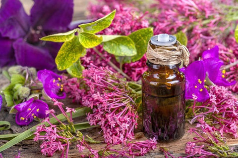 Clary Sage Essential Oil for High Blood Pressure