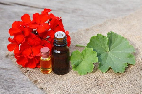 Geranium Essential Oil For Varicose Veins