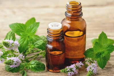 Peppermint Essential Oil for Immune Health