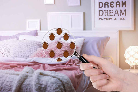 ow to use essential oils for bed bugs