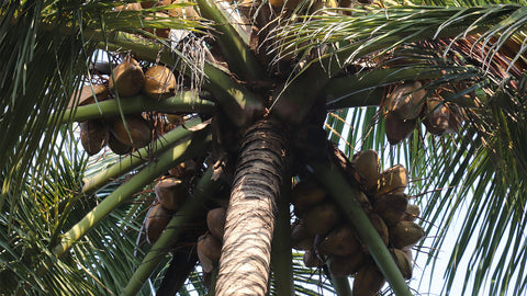 coconut oil wholesale supplier