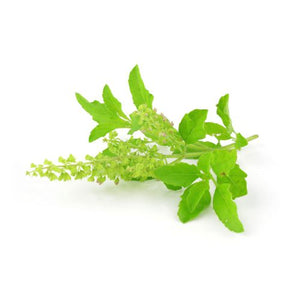 Tulsi Flavor Oil ( Holy Basil Flavoured Oil)