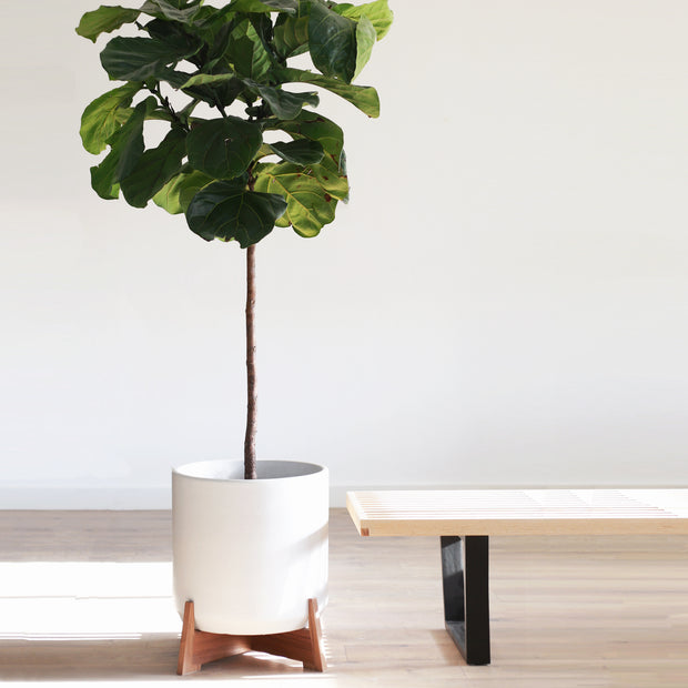 "XXL - Mid Century Modern Planter with Apollo Wood Stand - 15"" Ceramic Pot"