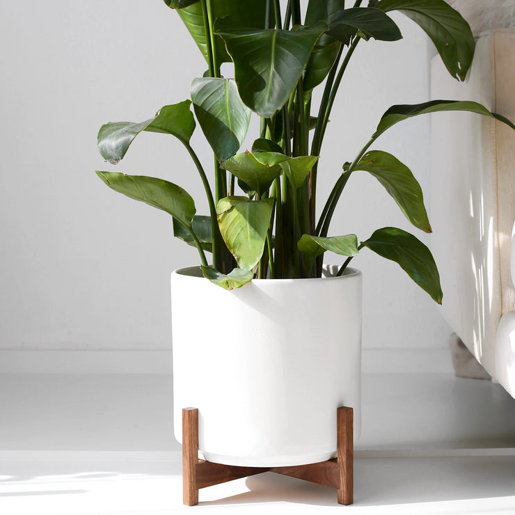 Large - Mid Century Modern Planter and Shorty Wood Stand