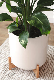 XXL Stella Mid Century Modern Ceramic Planter with Shorty Wood Stand - 16""