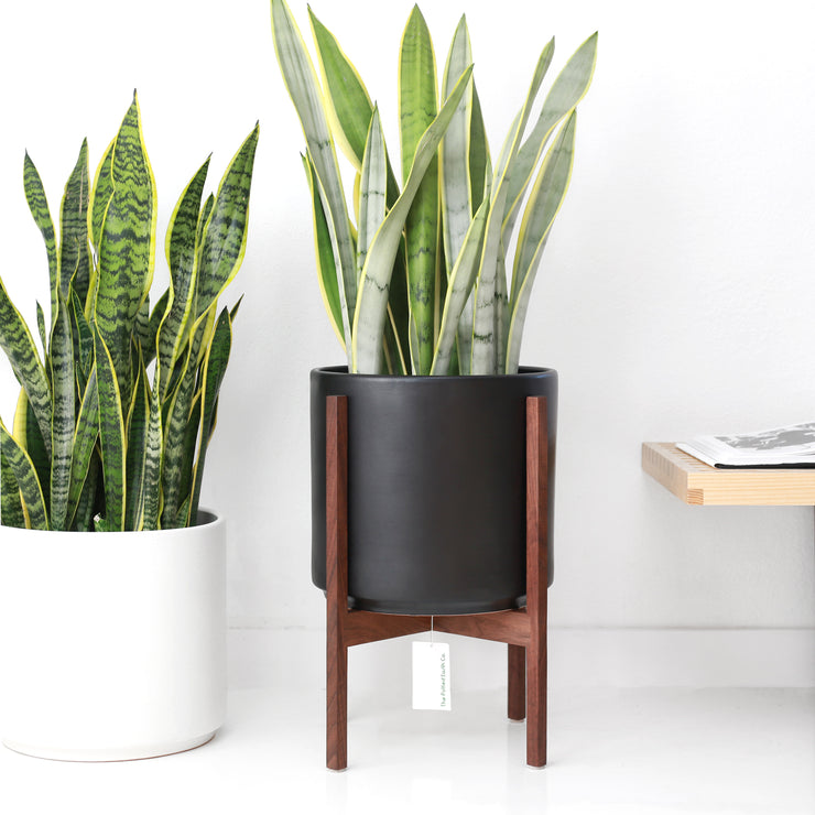 The Potted Earth Co. Black Mid-century Modern Planter and Walnut Plant Stand