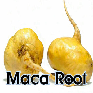 Maca Root 10:1 Extract Powder