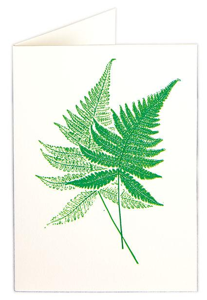 Pack of 5 Mini Cards - Fern