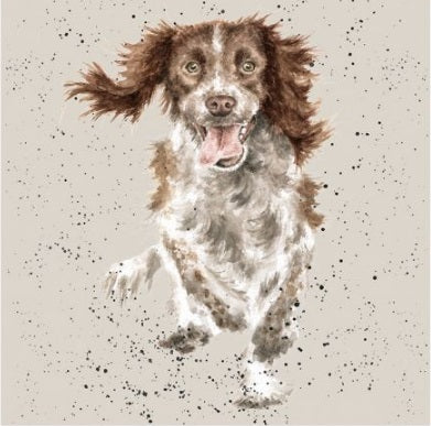 Wrendale Designs Springer Spaniel Card
