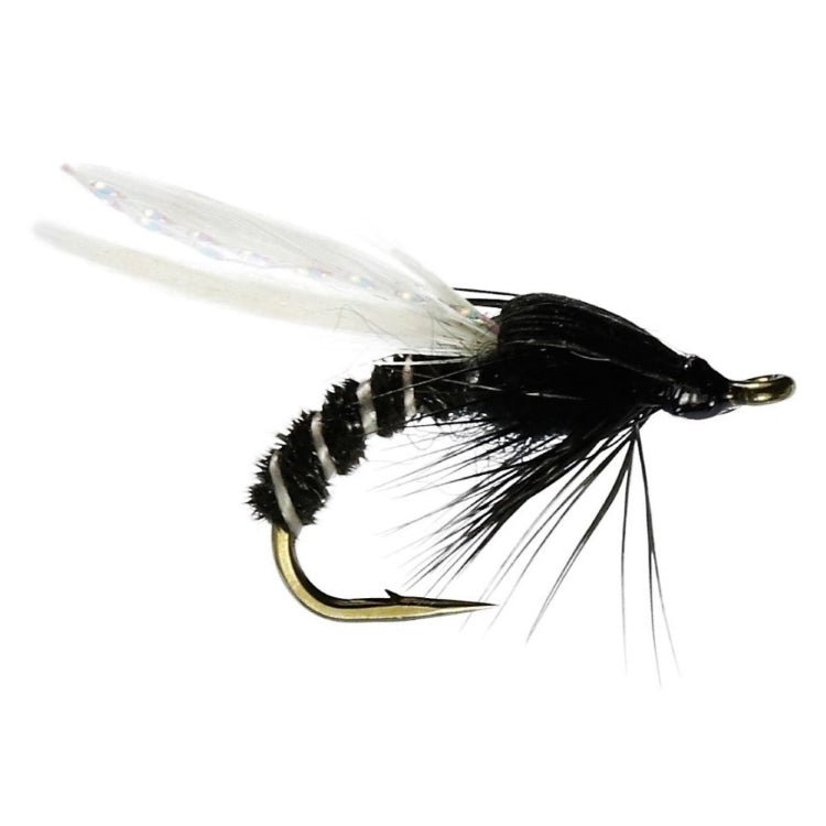 Black Adult Buzzer Flies
