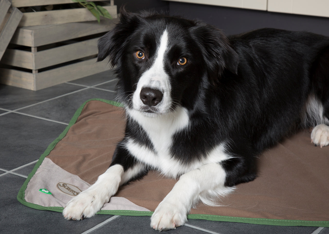 Scruffs Insect Shield Dog Blanket