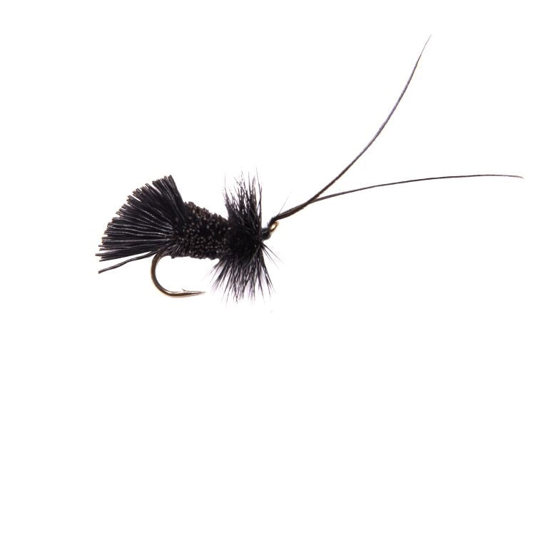 Black Horned Sedge Flies