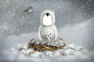 PNG Digital backdrop magic winter OWL background
