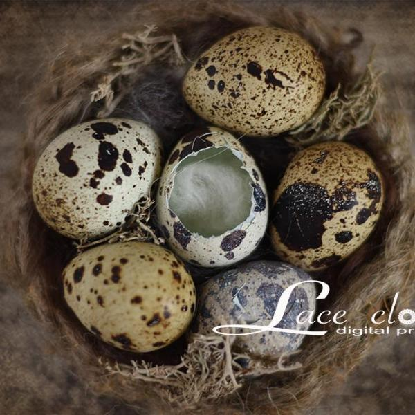 Digital backdrop Quail eggs