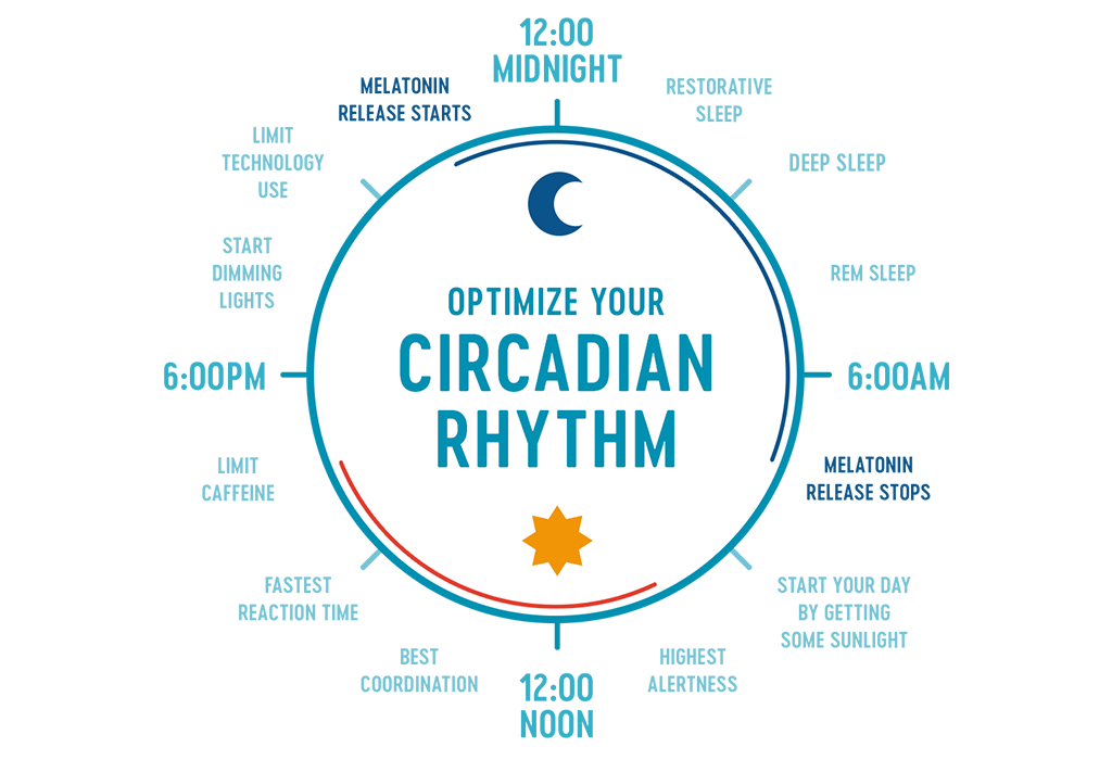 Use your circadian rhythm when you want to learn how to get more energy.
