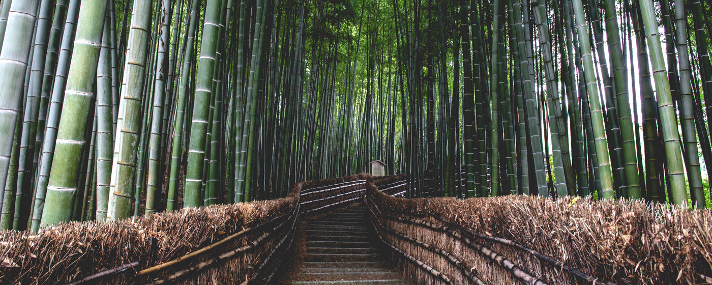 The Benefits Of Bamboo Clothing For You And The Environment