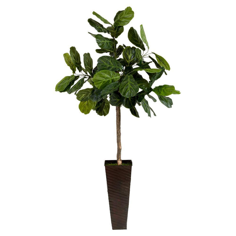 FIG TREE IN METAL CONTAINER