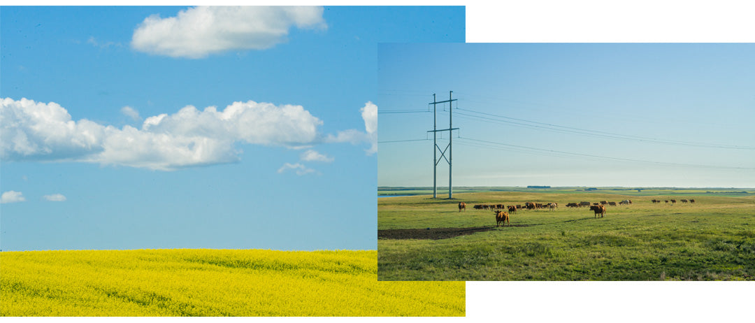 Alberta's foothills marks the transition between the Prairies and the Rockies