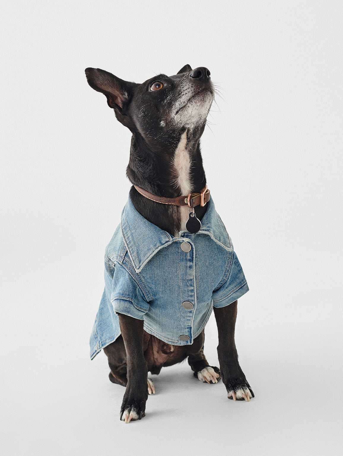 Fido Canine Trucker | Fetch