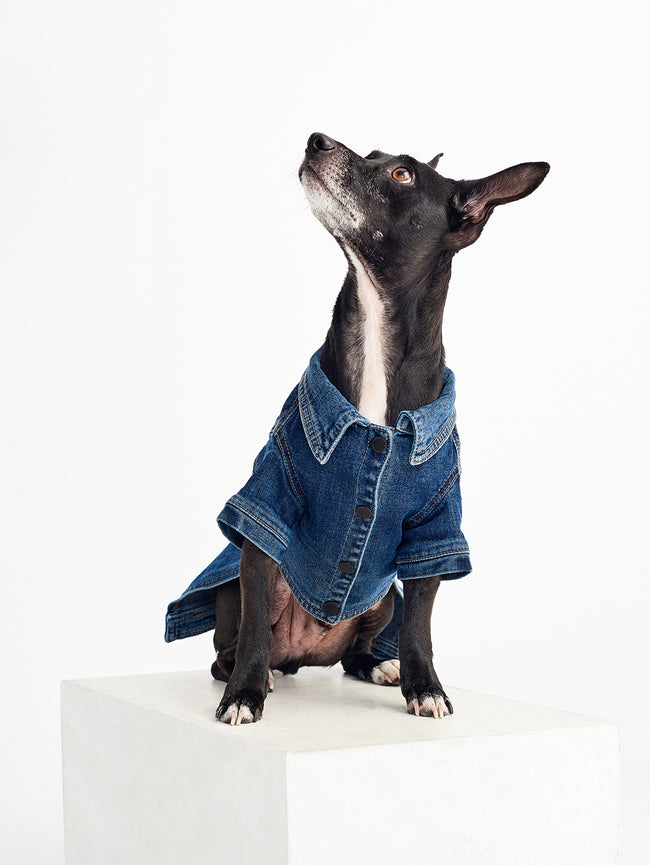 Fido Canine Trucker XS / S | Puppy Breath