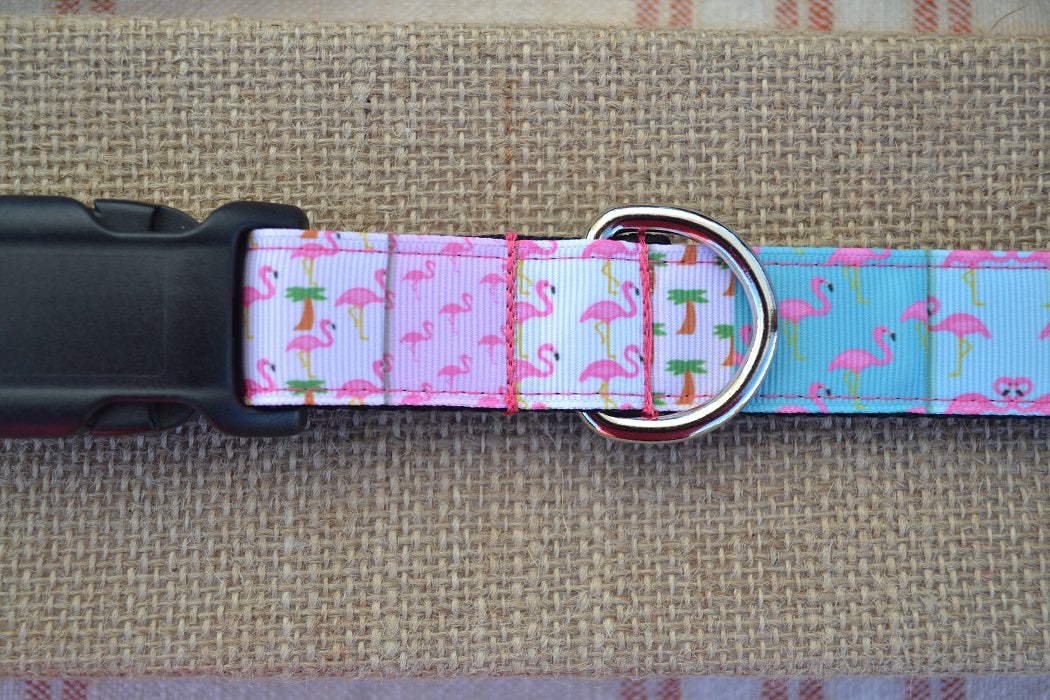 dog collar flamingo florida