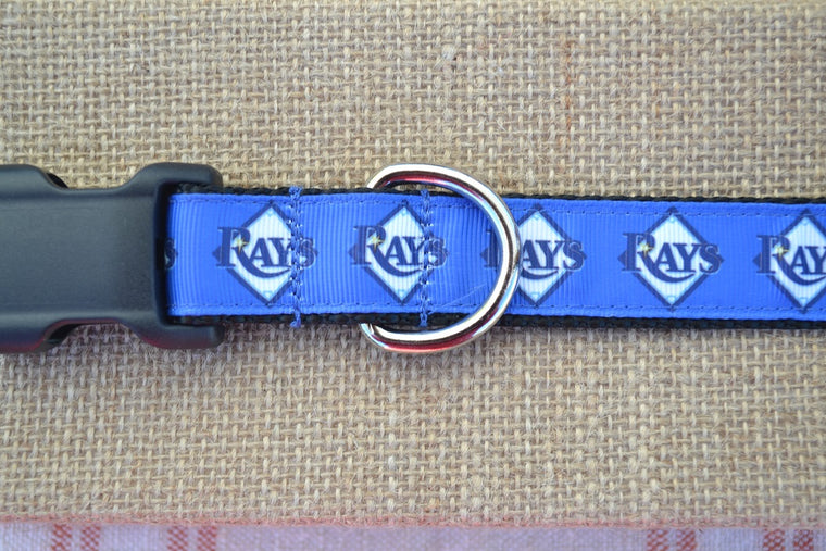 dog collar tampa bay rays mlb