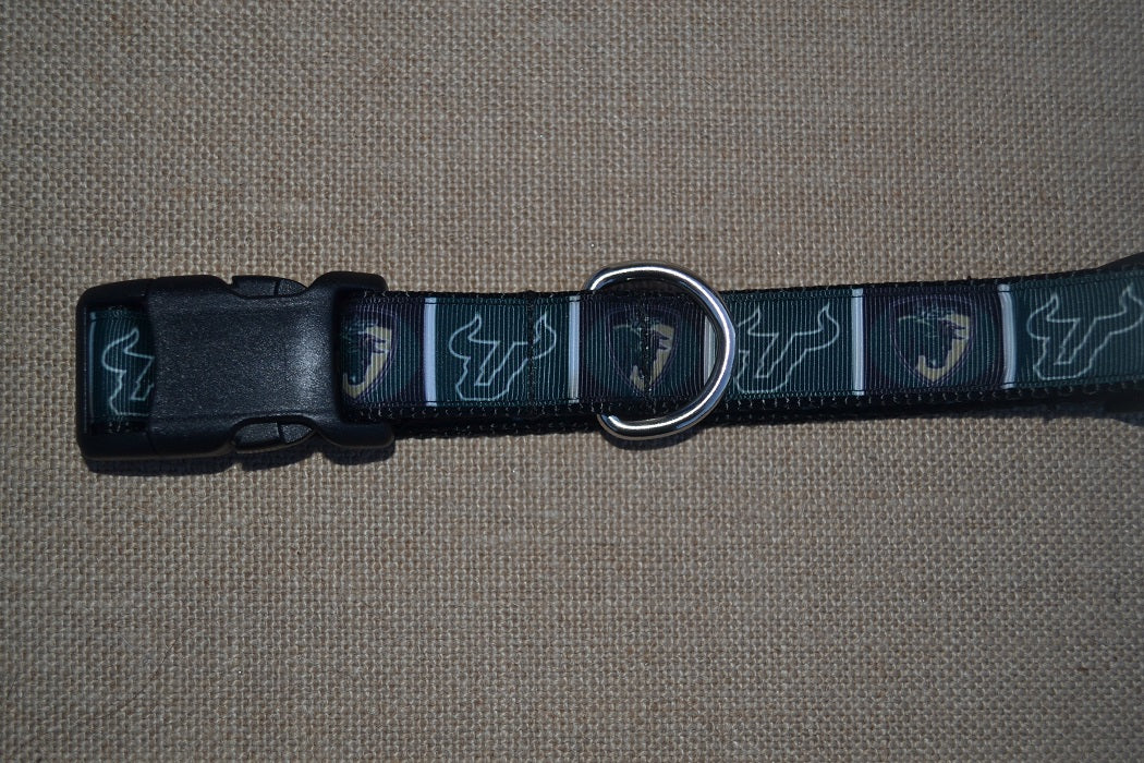 dog collar south florida bulls