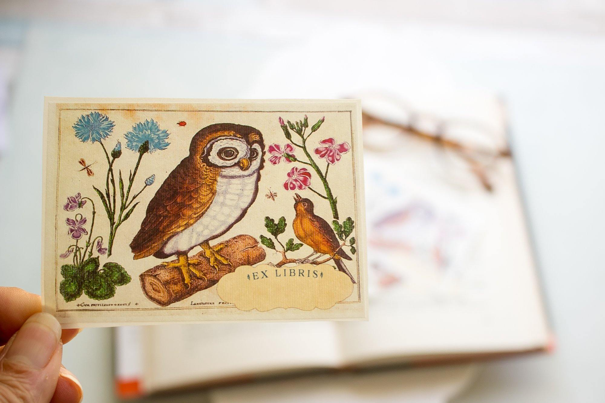Owl Collection blank cards, bookmark, and bookplates