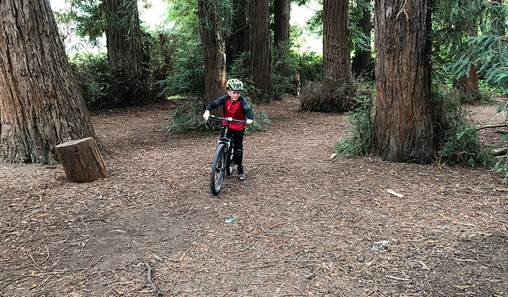 Trees and trails hidden in golden gate park