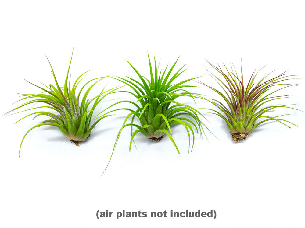 Fertilizer Kit with Spray Bottle and Mister / Tillandsia Air Plant Food  - Encourages Air Plants to Bloom with Formulated Nutrients