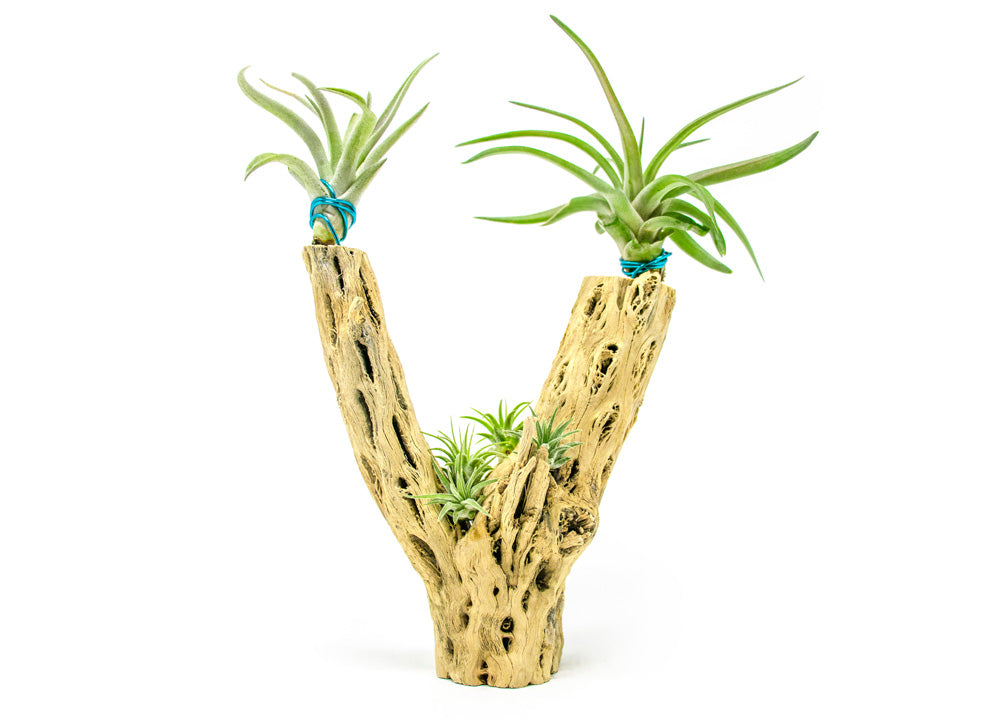 Air Plant Hanging Wire: 1 Foot Long, 16-Gauge Wire
