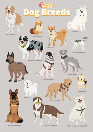 BFF GAME: Dog Breeds Poster