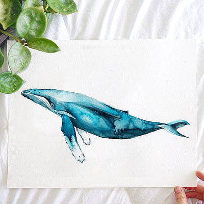 Blue Humpback Whale Watercolor Kit