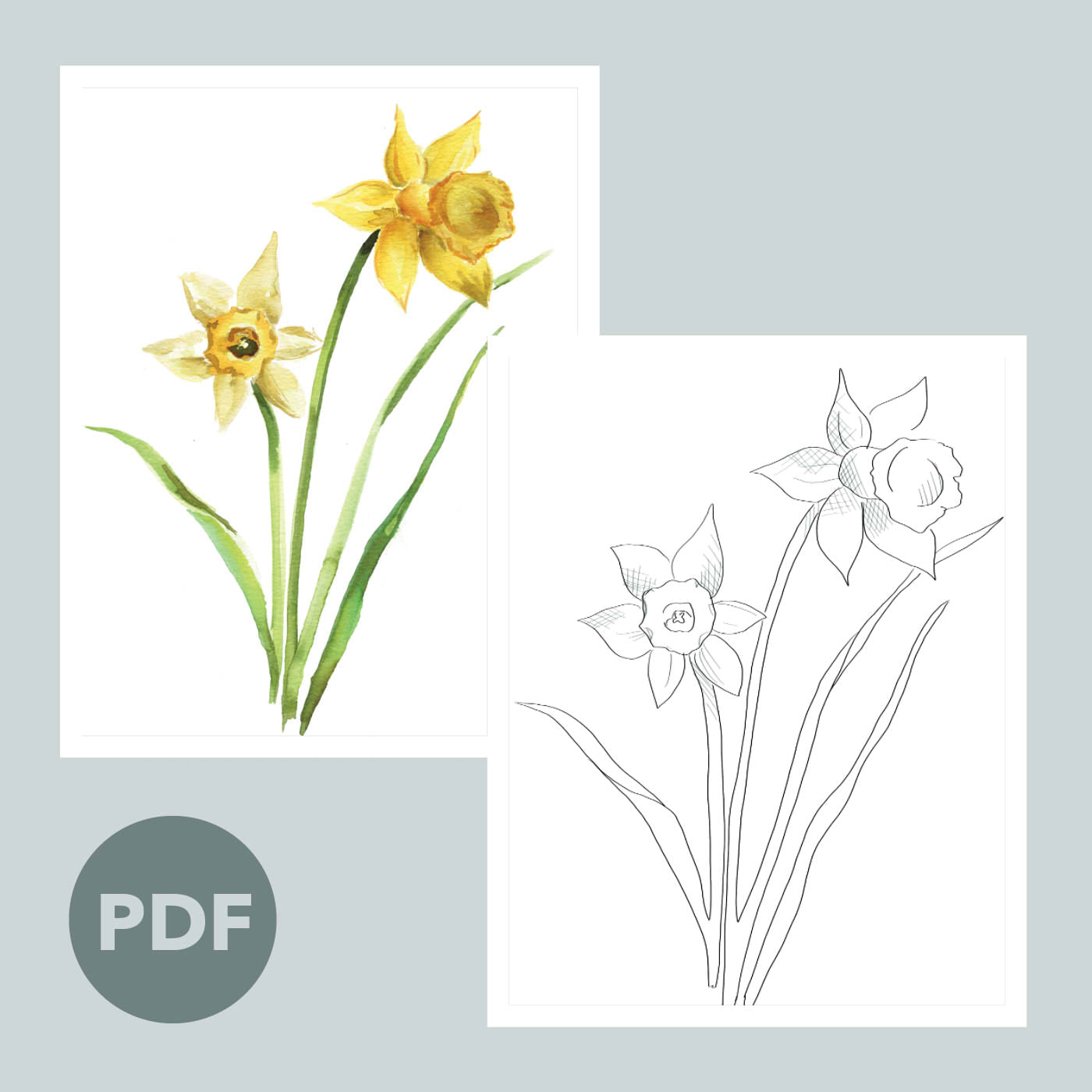 Daffodils Outline