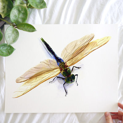 Dragonfly Watercolor Kit