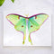 Luna Moth Watercolor Kit