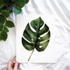 Monstera Leaf Watercolor Paint Kit