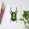 Beetle Watercolor Kit