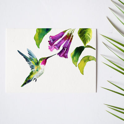 Hummingbird Watercolor Kit