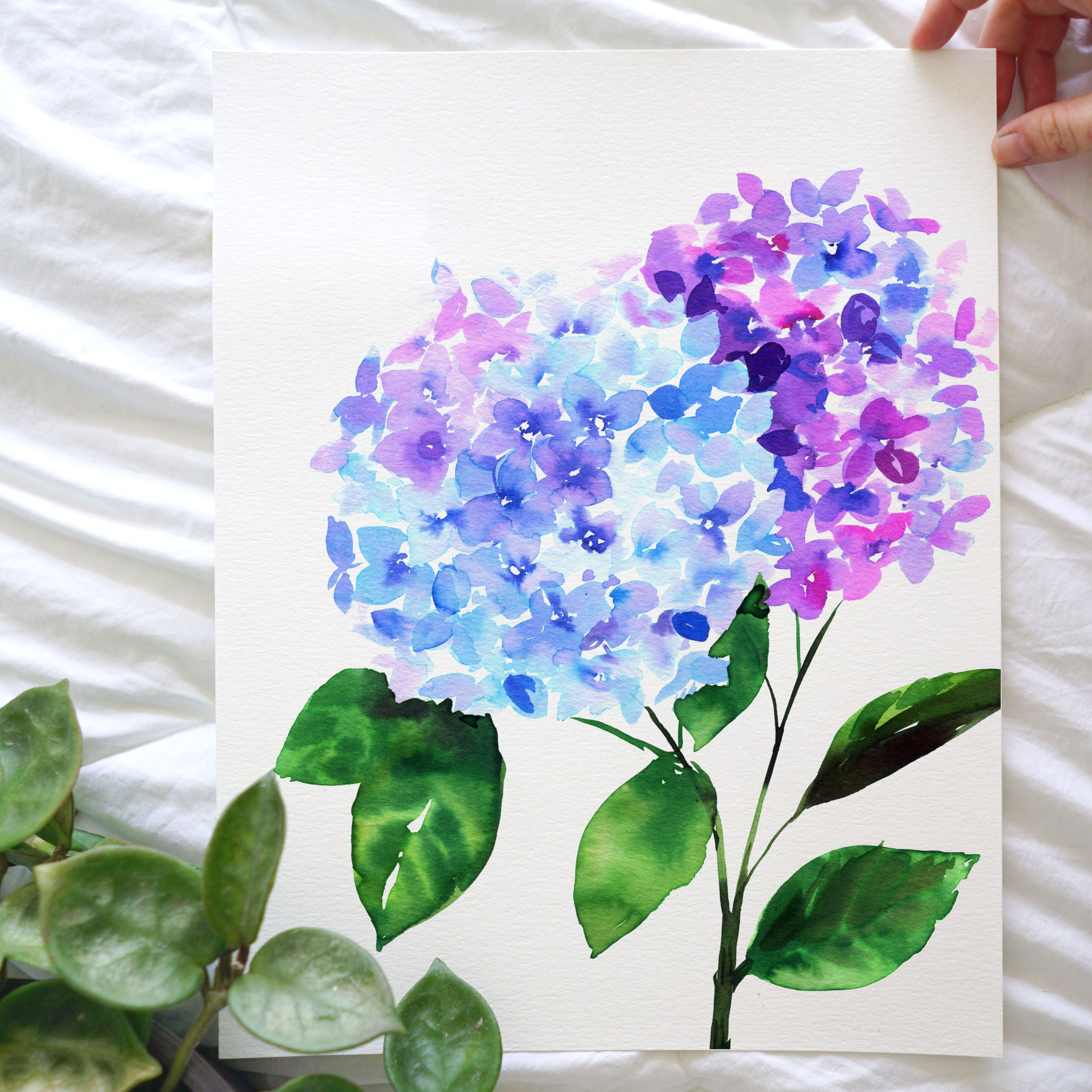 Hydrangea Watercolor Kit