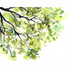 Treetop Watercolor Paint Kit