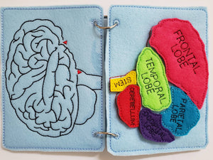 Human Brain puzzle quiet book page - brain maze - learning board - Medical Play Set - human body - busy board education
