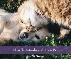 How To Introduce A New Pet