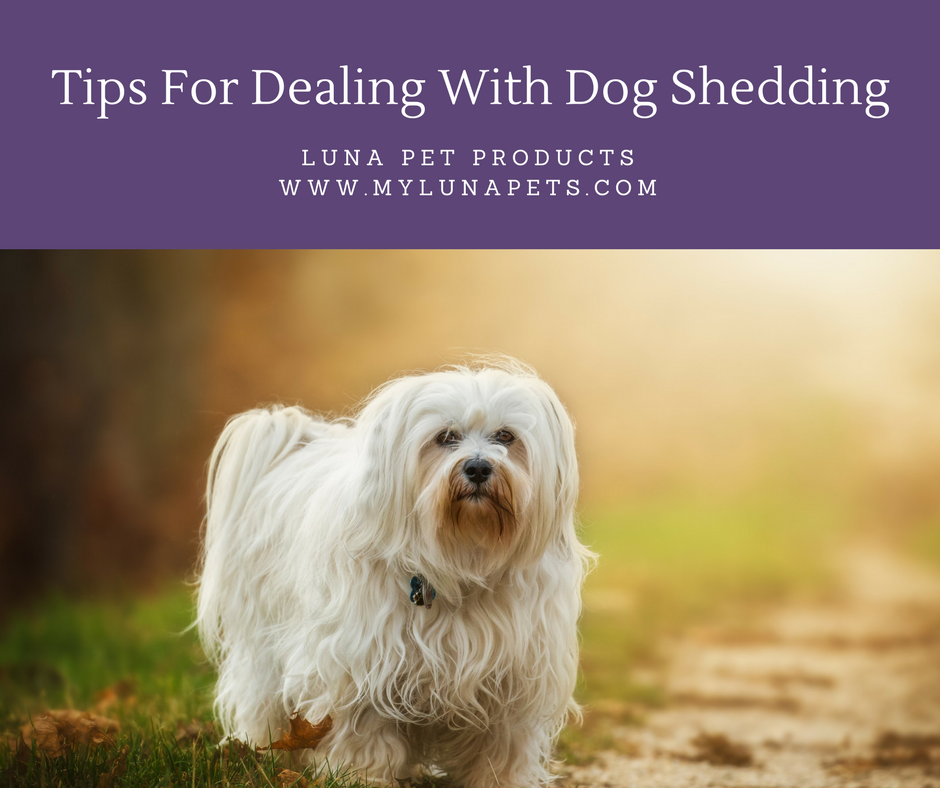 Tips For Dealing With Your Dog's Shedding