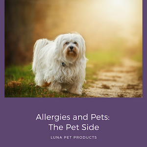 Allergies and Pets: The Pet Side